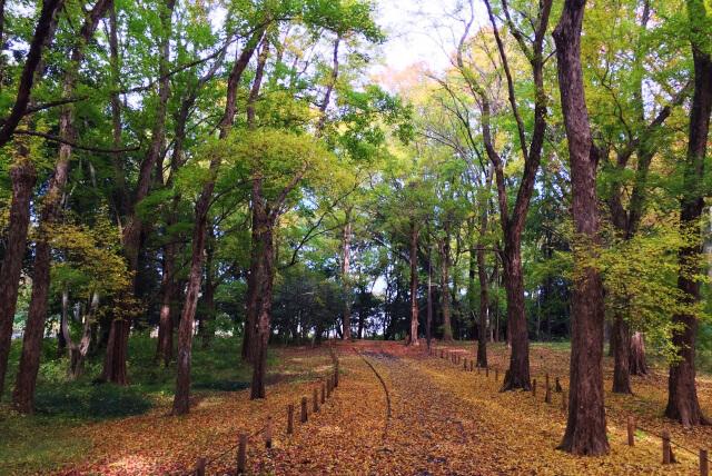 小金井市 小金井公園
